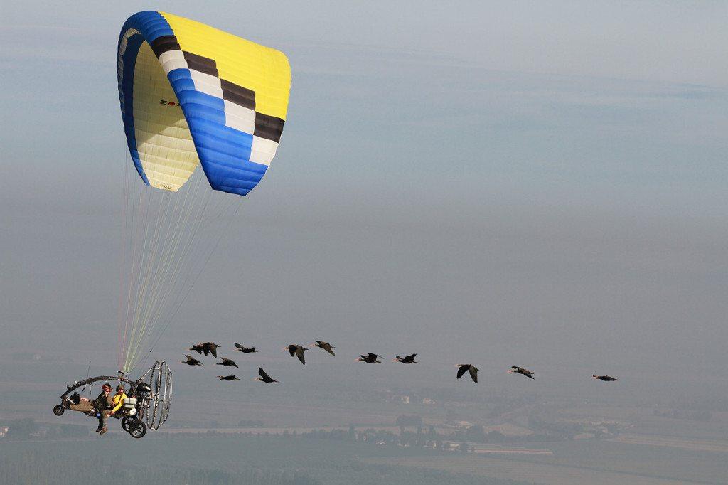 ibis_con_paraplane_MU