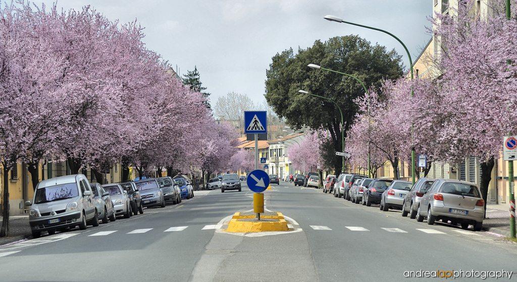 Viale IV Novembre a Borgo San Lorenzo