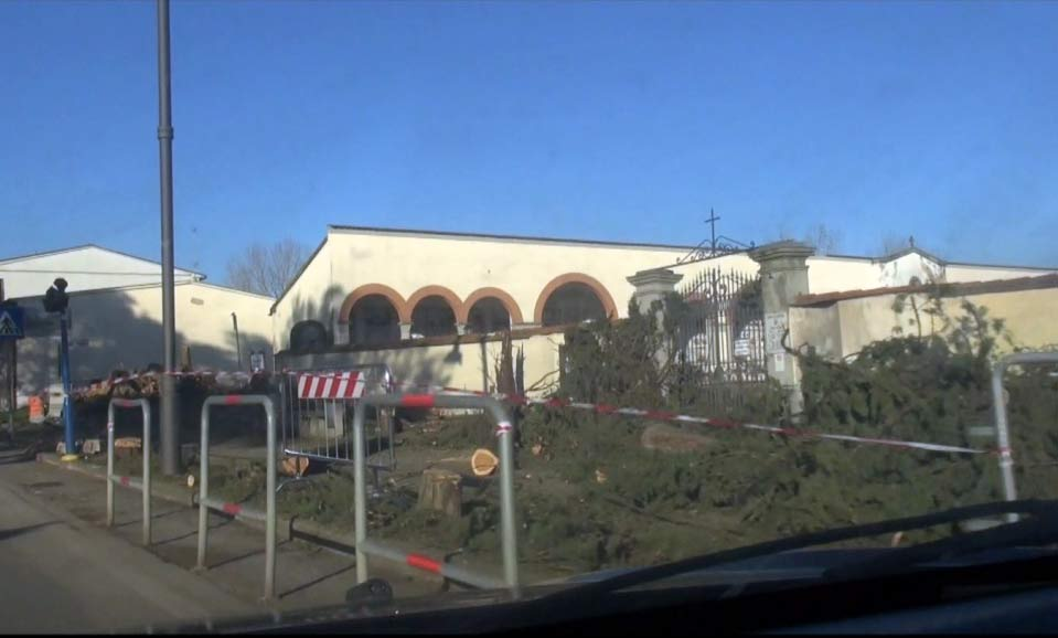 I cipressi caduti davanti al cimitero di Scarperia