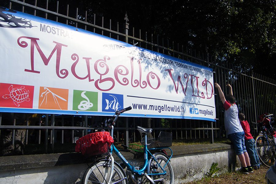 Mugello-wild-2015-1