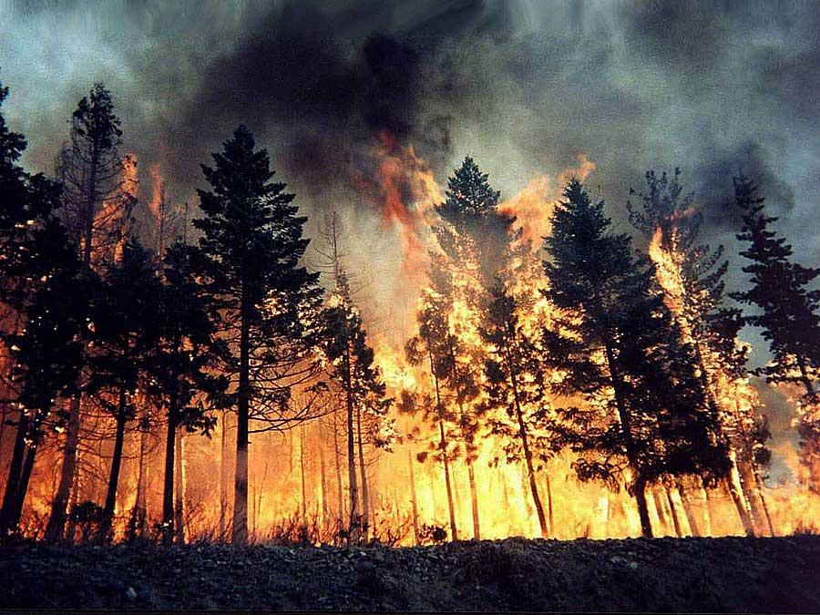 (Bosco in fiamme Foto di Repertorio)