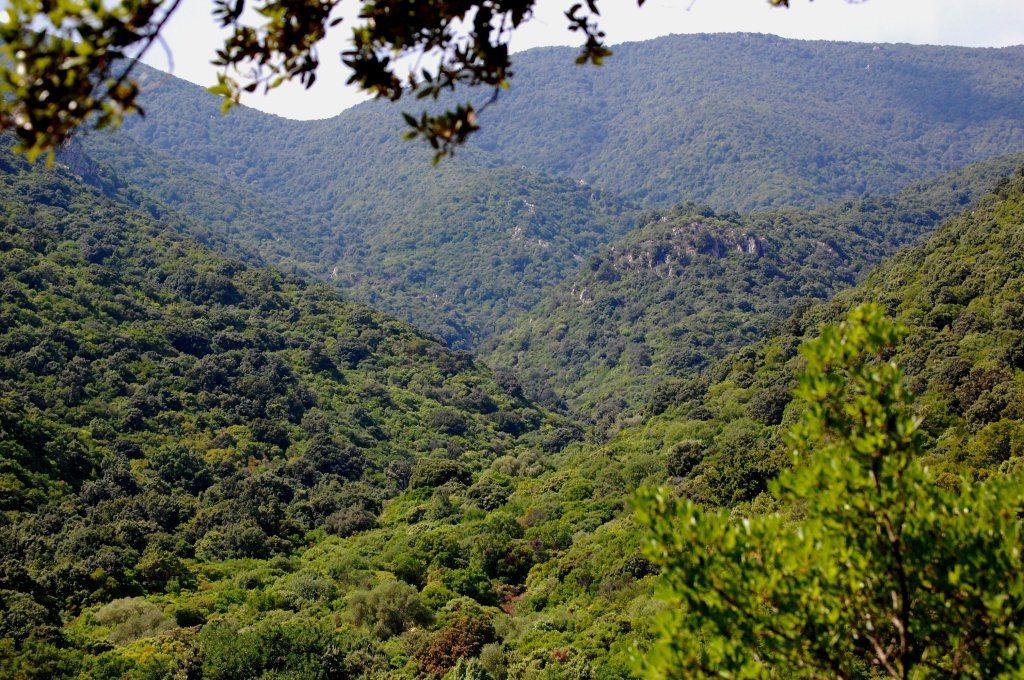 boschi e foreste mugellane