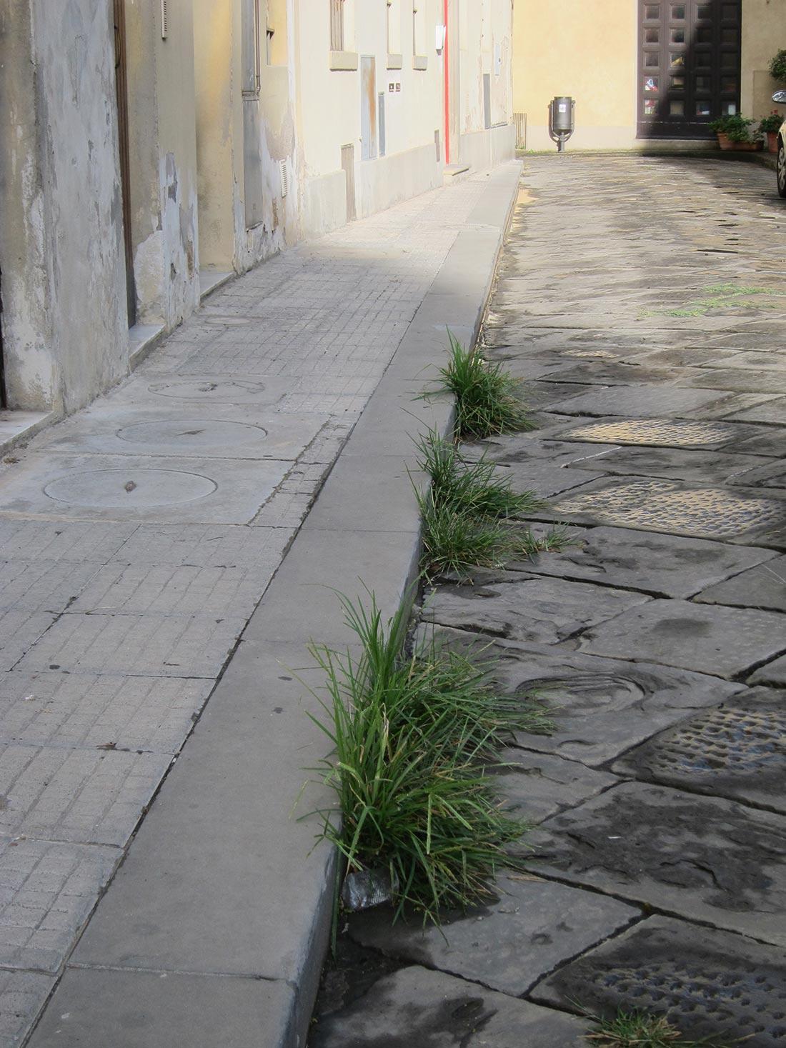 Erbacce in via Cocchi a Borgo San Lorenzo