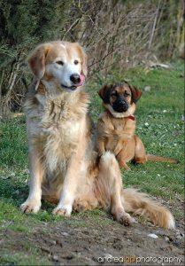 cani verticale