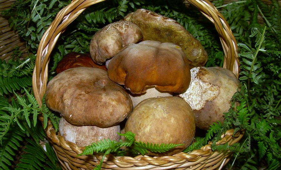 funghi-porcini2