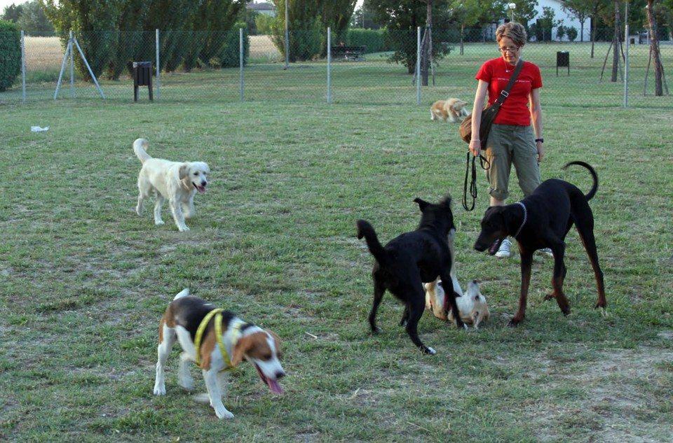 area sgambamento cani