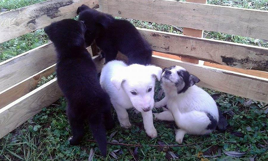 cuccioli-cercano-famiglia-1