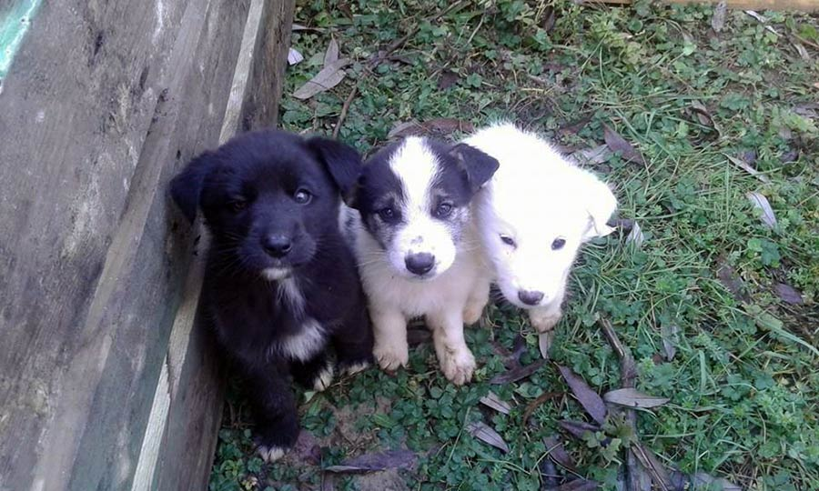 cuccioli-cercano-famiglia-3