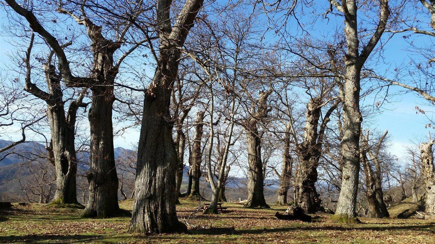 boscocastagno2 (1400 x 787)