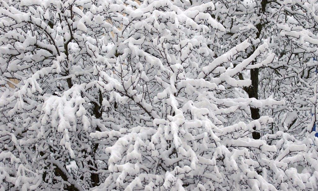 inverno neve sfondo sito