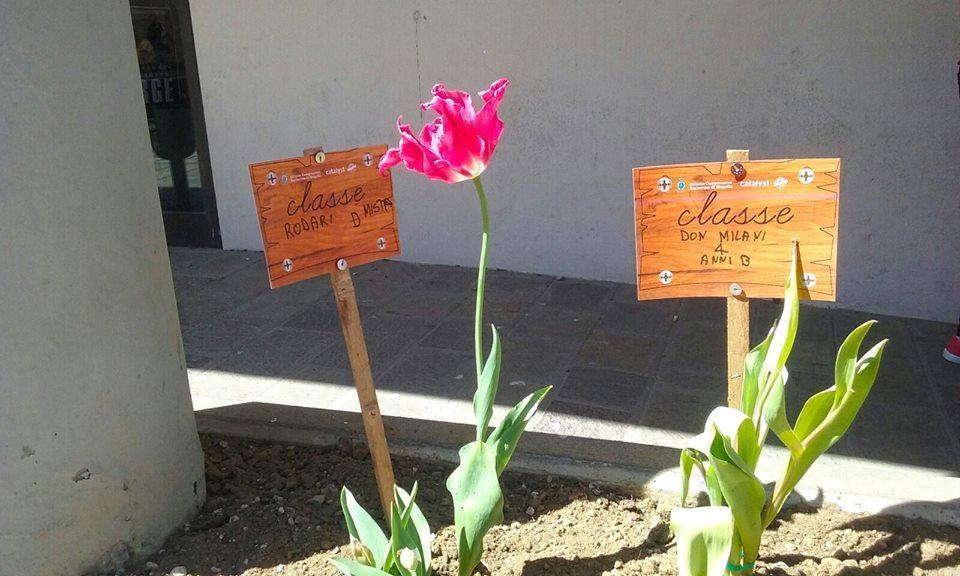 Tulipani teatro Corsini