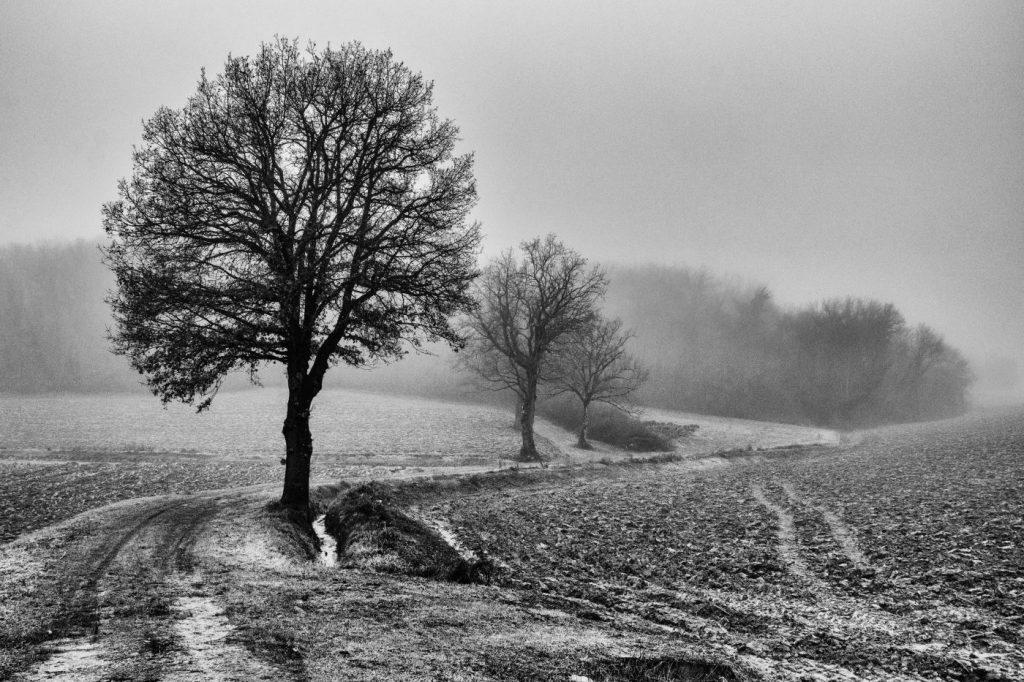 foto mirko borselli (3)