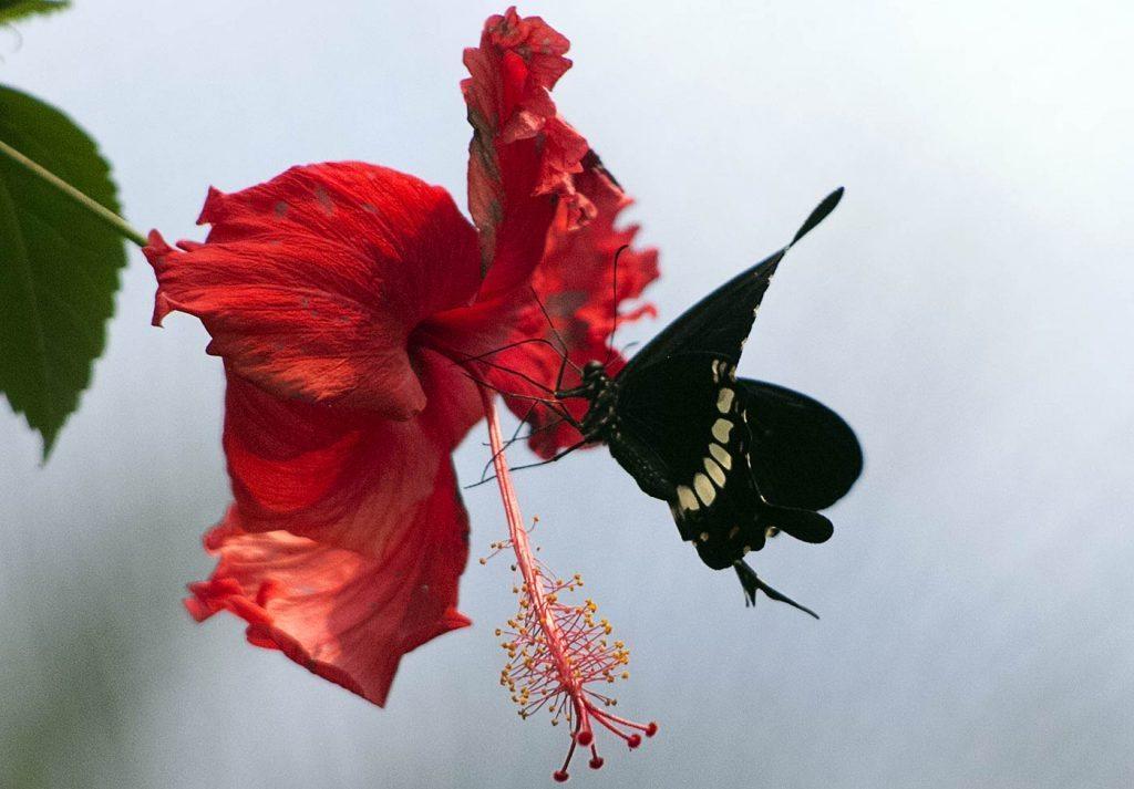farfalla-claudia-giusti-Wunderkammer