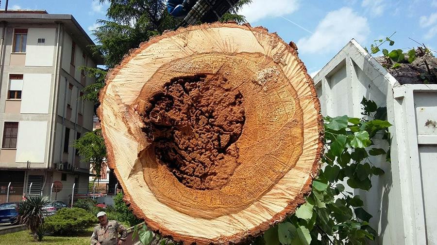 tagli-alberi-ammalorati-borgo-1