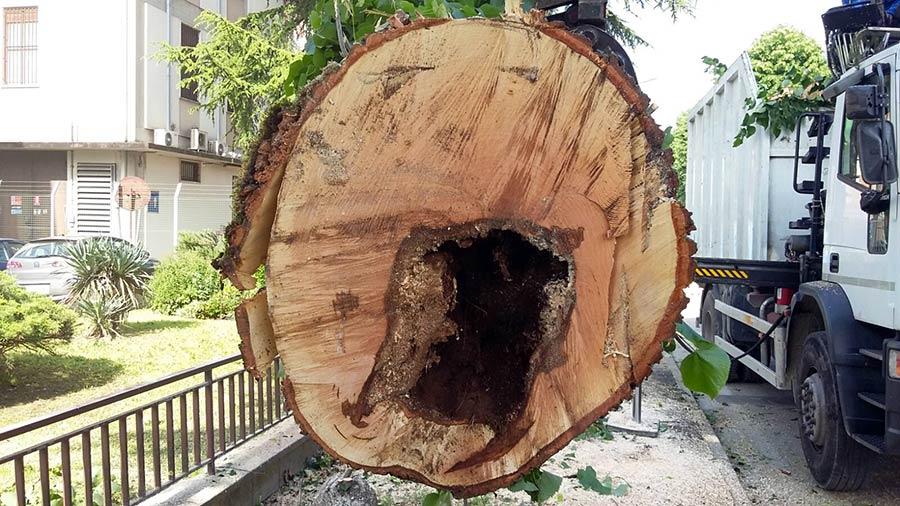 tagli-alberi-ammalorati-borgo-2
