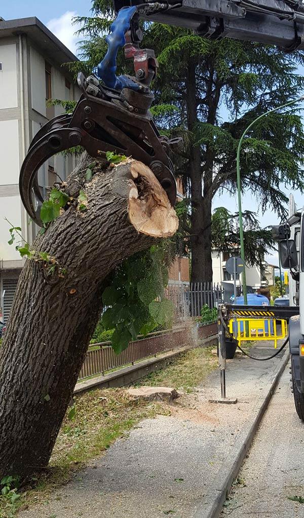 tagli-alberi-ammalorati-borgo-3