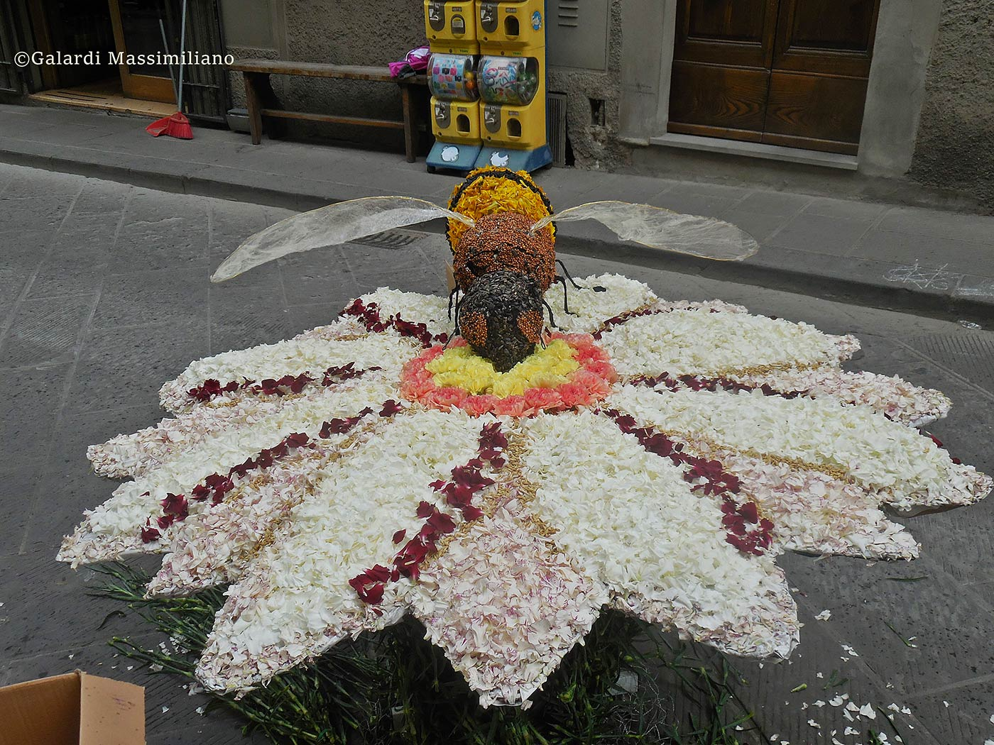infiorata-2016-galardi-4