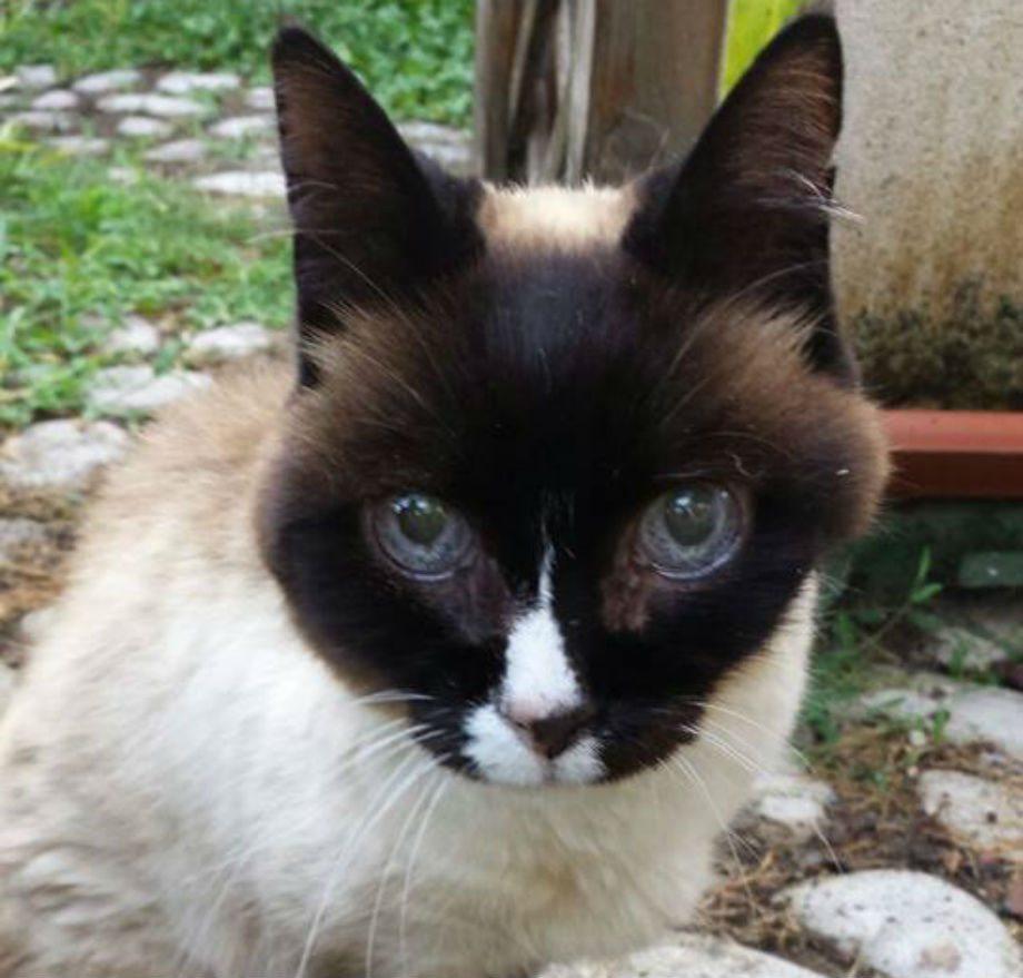 La gatta ritrovata a Barberino