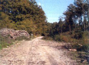 strada-forestale-a-nord-del-monte-beccai