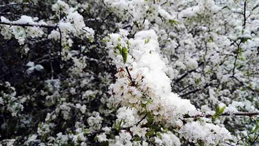 Neve-aprile-a-Pietramala-