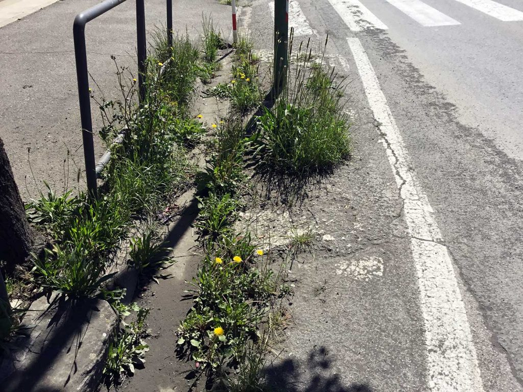 asfalto-manto-stradale-degrado-buche-borgo-2017-6