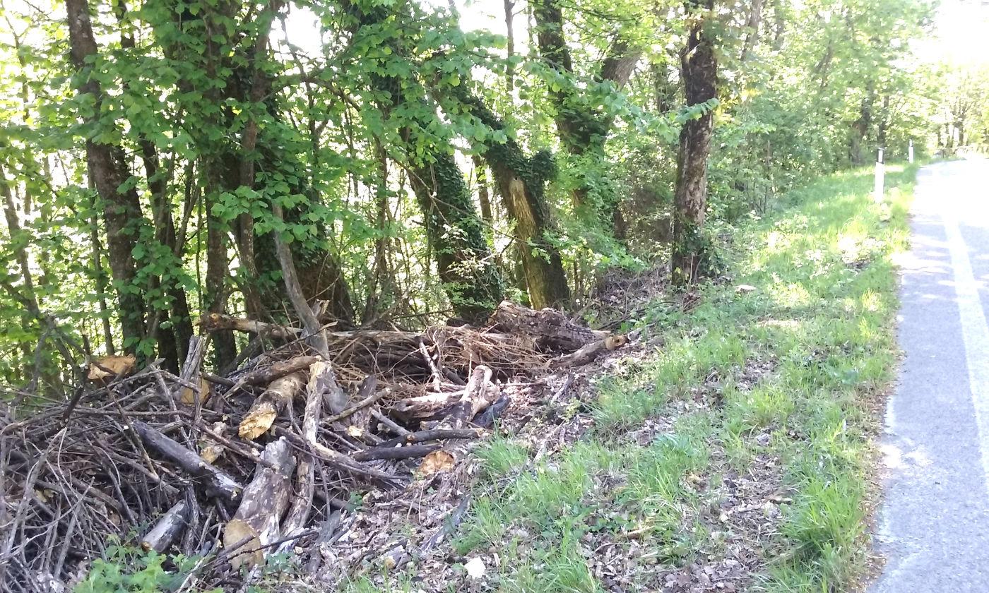 degrado alberi firenzuola 1