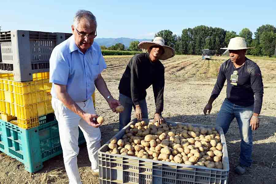Il filo del mugello patate mugellane ecco il video for Raccolta patate