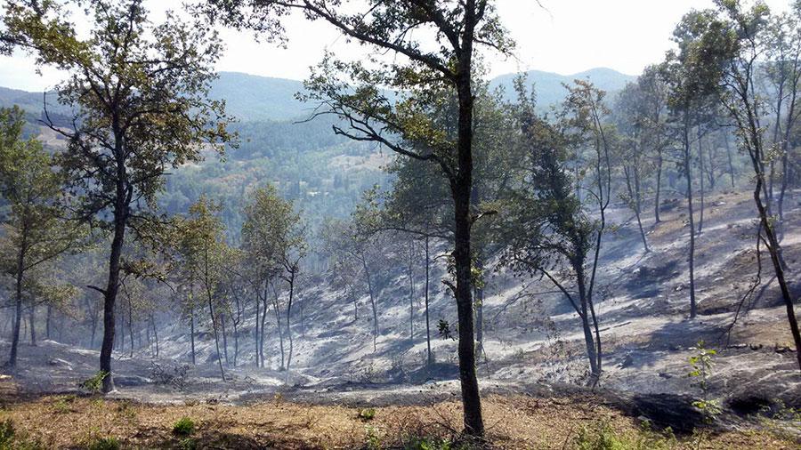 bovino-vicchio-incendio-agosto-2017
