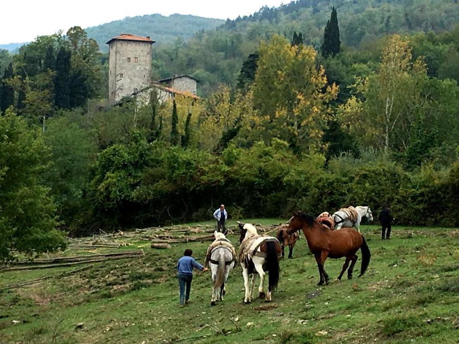 A raccoglier legna con i muli, e sullo sfondo, la torre di Pulica