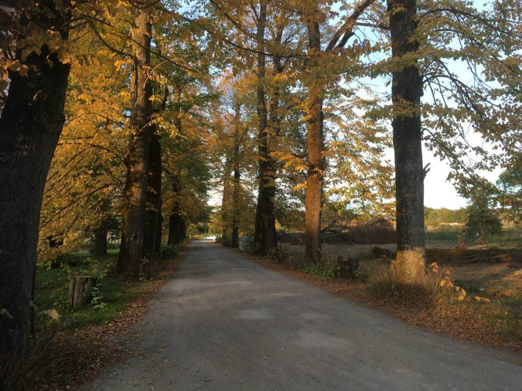 Villa Martini alberi