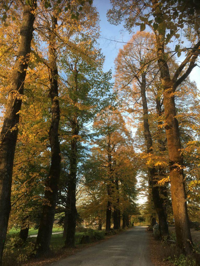 Villa Martini alberi2