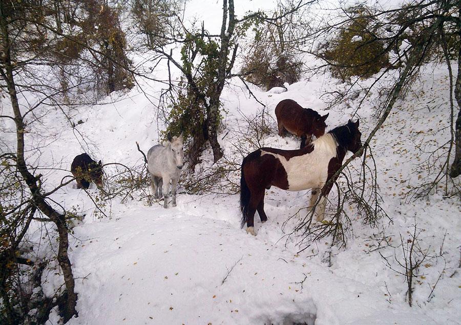animali-dispersi-neve-novembre-2017-2