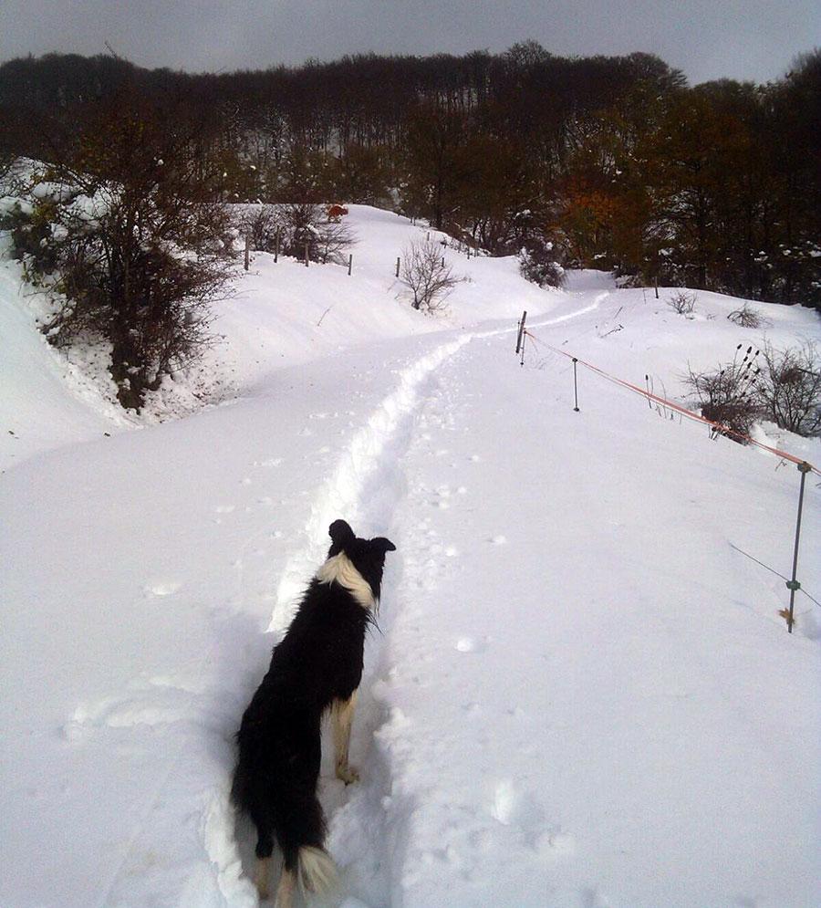 animali dispersi neve novembre 2017 3